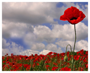The Tall Poppy Syndrome