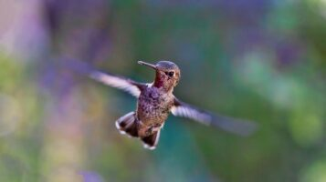 Hummingbird Haven